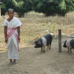 Piggery Dev. Program Benefeciary