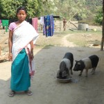 Piggery Dev. Program Benefesiary